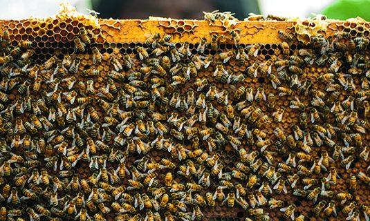 Bijenbaas neemt Bijzaak over